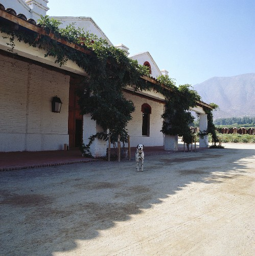 A dog in front of Errazuriz Estate, Aconcagua Valley, Chile