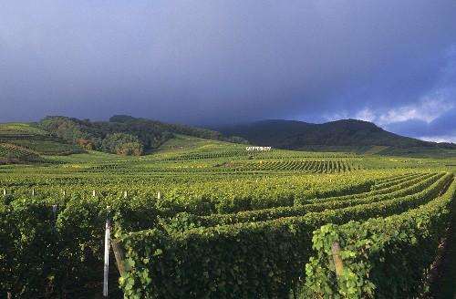 Kaefferkopf (Grand cru vineyard site), Ammerschwihr, Alsace, France