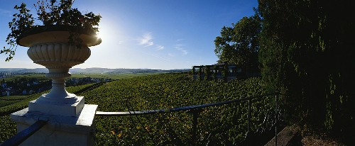 Vineyard in front of Schloss Johannisberg, Geisenheim, Rheingau