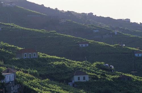 Blick auf die Stadt Câmara de Lobos, Madeira