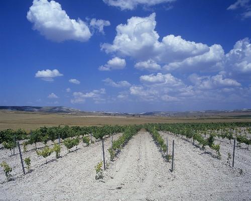 Chalky soil near Pesquera de Duero, Ribera del Duero, Spain
