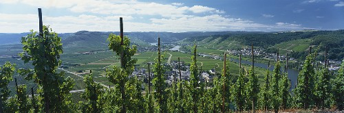 Wine-growing region on the Mosel, Mosel-Saar-Ruwer, Germany