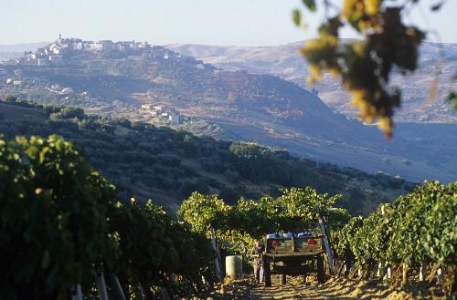 Aglianico del Vulture DOCG wine-growing area, Basilicata, Italy