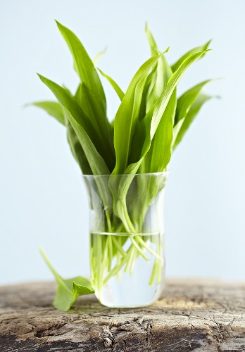 Ramsons (wild garlic) leaves in glass