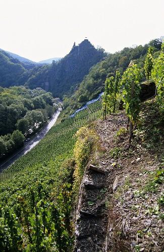 'Altenahrer Eck' Einzellage (single vineyard), Ahr