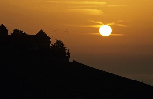 Sunset in vineyards near Schloss Johannisberg, Rheingau, Germany