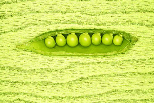 Opened pea pod with green peas inside