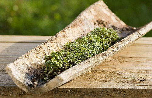 Cress in a roof tile