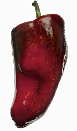 A poblano chilli pepper