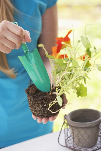 A woman holding a nasturtium and a trowel