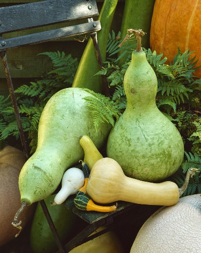 Various squashes and gourds on garden chair