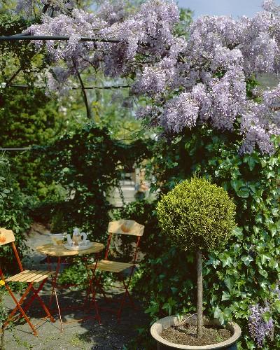 Idyllic wisteria-covered pergola