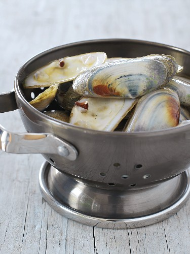 New Zealand pipi shells in a metal colander