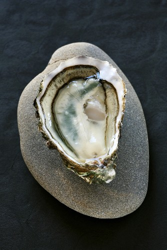 Oyster (from the Marennes d'Oléron oyster region, France)