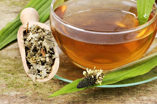 Ribwort plantain tea and ribwort plantain