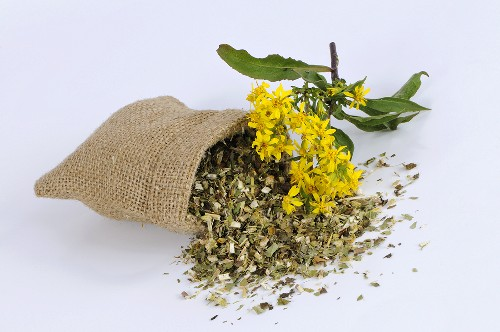 Golden rod, fresh and dried