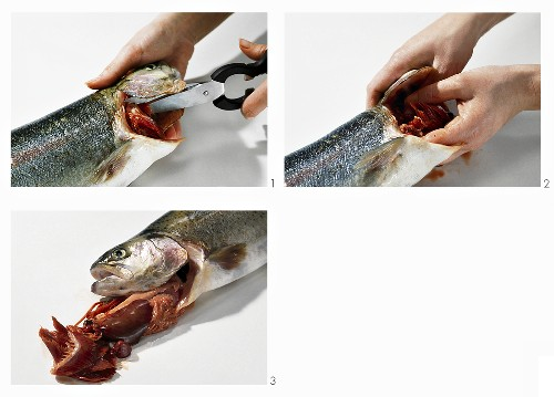 Gutting a salmon trout through the gills