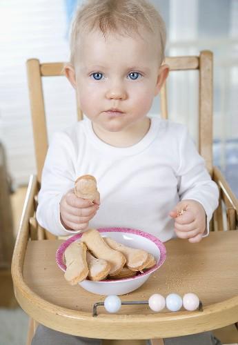 Small child sitting in high chair, eating sponge finger