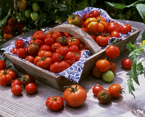 Various types of tomatoes in a wooden basket