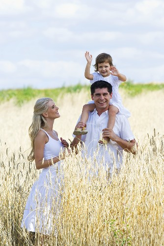 Young family with daughter in a cornfield