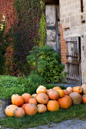 Pumpkins in grass in front of a building