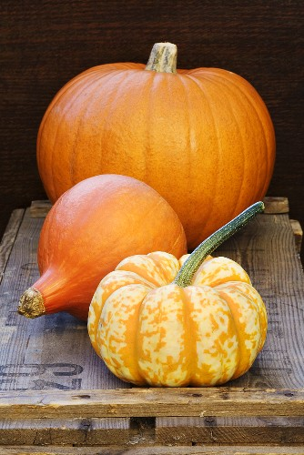 A giant pumpkin and winter squash