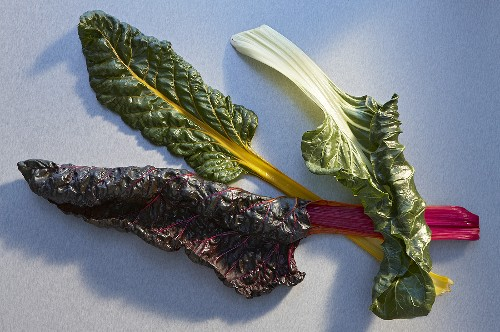 Three chard leaves with coloured stems