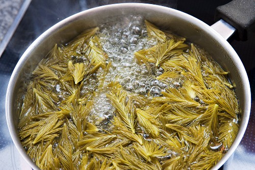Pine needles being boiled (bath essence)