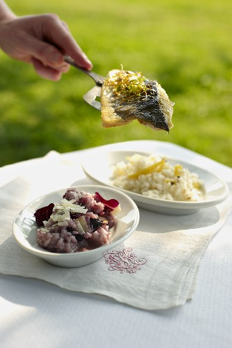 Red wine risotto and lemon risotto with perch fillet