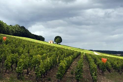 Haus und Baum im Rebberg Clos du Rois, Burgund, Frankreich