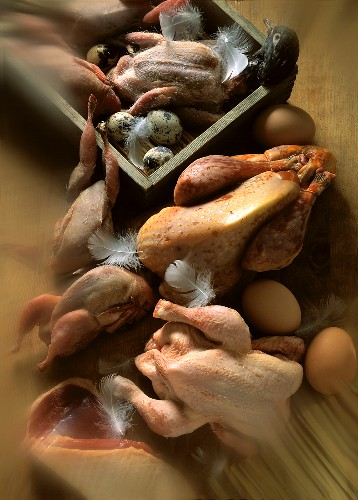 Uncooked Poultry Still Life