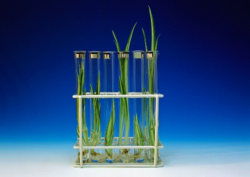 Rooted offsets in test tubes