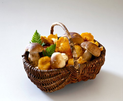 Basket of Cep and Chanterelle mushrooms