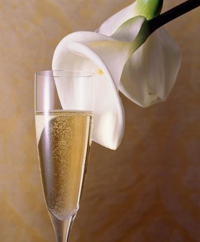 Glass of Champagne; Calla Lily