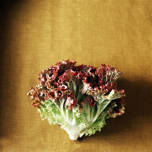 Fresh Head of Red Leaf Lettuce