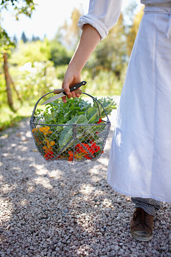Chef holding a basket full of wild herbs and flowers, Am Hochpillenberg, Schwaz, Tyrol, Austria
