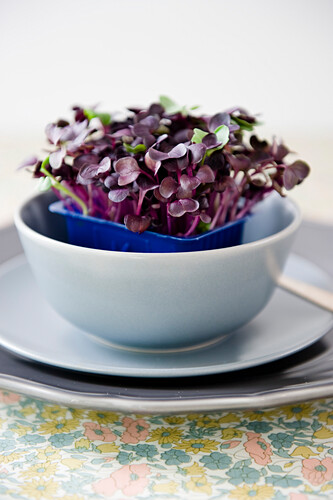 Bean sprouts in a bowl, Healthy Food, Homegrown
