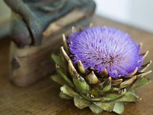 An artichoke flower in front of a wooden figure