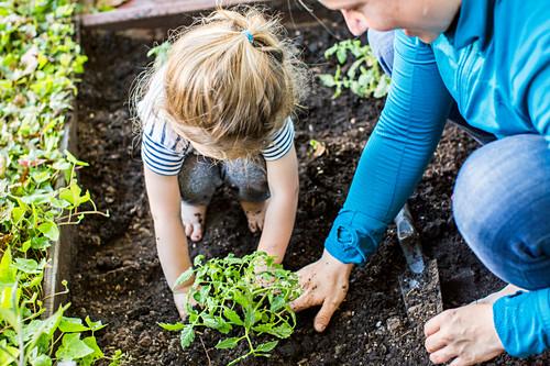 Caucasian mother teaching gardening to daughter