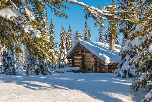Gemütliche Blockhütte im Nadelwald, Luosto, finnisch Lappland