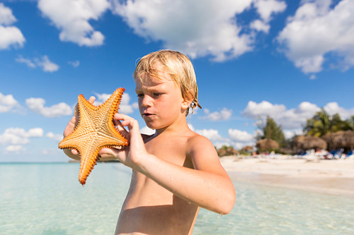 6 year old boy holding a starfish, dream beach at Cayo Levisa, swimming, beach holiday, tourists, lonely beach at Cayo Levisa, beautiful small sandy beach, turquoise blue sea, palm tree, family travel to Cuba, parental leave, holiday, time-out, adventure,