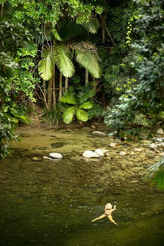 Der Mossman River ist der Spielplatz für Lodgegäste, Silky Oaks Lodge, Queensland, Australien