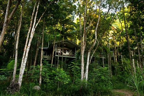 Die River Treehouse liegen direkt am Mossman River, Silky Oaks Lodge, Queensland, Australien