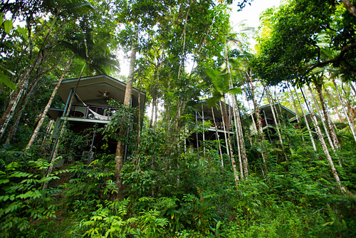 Die River Treehouse liegen direkt am Mossman River, Silky Oaks Lodge, Queensland, Australien