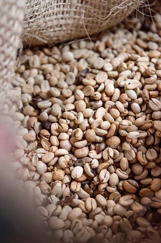 ungeröstete Kaffeebohnen für den Export, Hacienda Venecia bei Manizales, UNESCO Welterbe Kaffee Dreieck (Zona Cafatera), Departmento Caldas, Kolumbien, Südamerika
