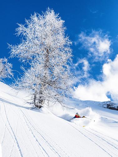 Freeriderin macht einen perfekten Powderturn neben einen vereisten Baum, Bärenkopf, Tirol, Österreich