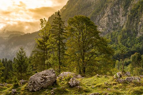 Idyllische Landschaft am Königssee bei Salet, Nationalpark Berchtesgaden, Berchtesgadener Land, Oberbayern, Bayern, Deutschland, Europa