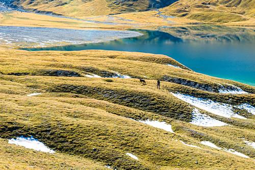 Mann wandert mit Hund über grüne Hügel in Richtung Bündner Bergsee, Lai da Rims, Schweiz, Graubünden, Europa