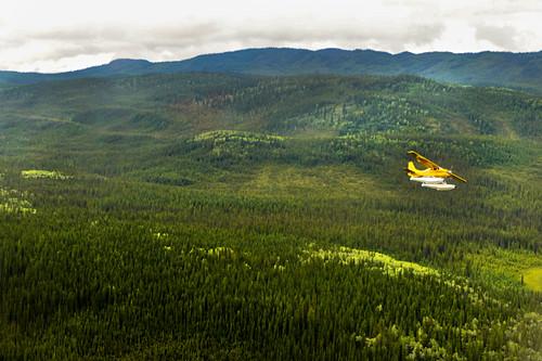 Gelbes kleines Sportflugzeug fliegt über den grünen Wald von Whitehorse, Yukon, Kanada