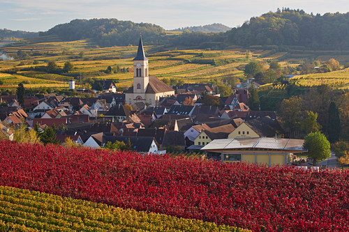 View of Oberrotweil surrounded by vineyards, Kaiserstuhl, Baden-Württemberg, Germany, Europe
